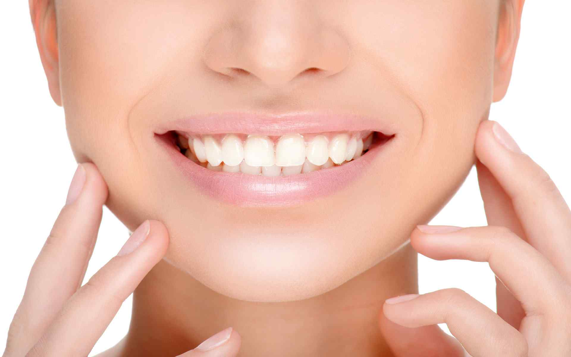 Read more about the article Teeth: Names, types, and functions